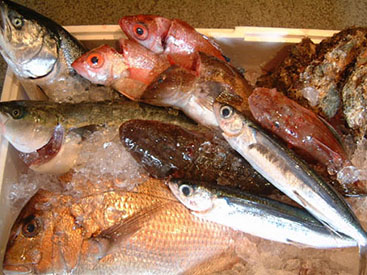 大戸瀬漁港より仕入れた魚介類