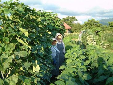 野菜を作って下さる契約農家の方々